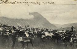 Trollheimen, Reindyrsamling