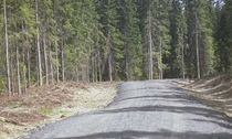 Skogsbilveg sommer