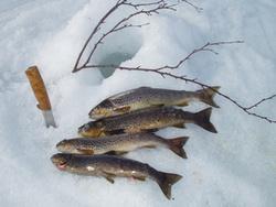 Dagens fangst (Foto: Edgar Kattem)