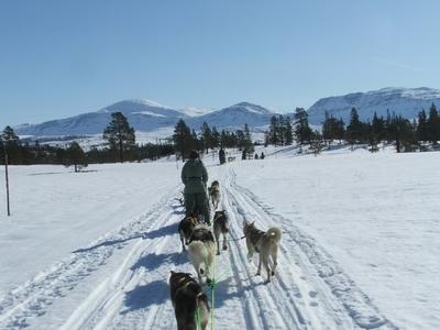Hundespann i Skjækra_400x300_400x300.jpg