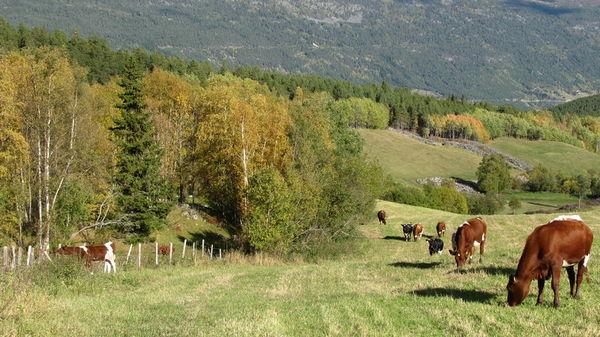 Landbruksinformasjon 2014