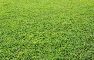 grass-background-316444_1280