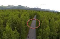 Reese Hanneman ute på rulleski i Alaskas dype skoger. Bilde fra YouTube-film av Austin Johnson.