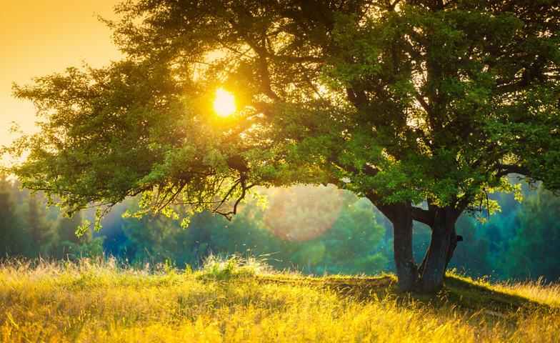 Illustrasjonsfoto natur og miljø, eiketre i solnedgang