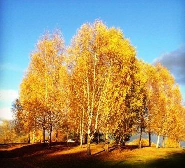 Høstbilde, Foto Kari-Mette Fjell