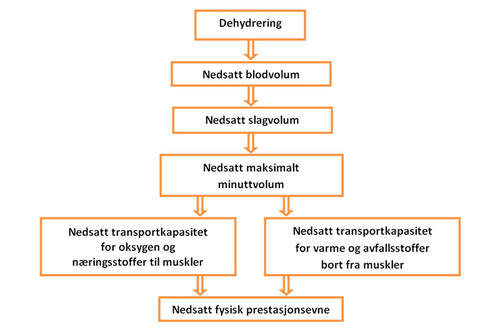 Mekanismer ved dehydrering. Illustrasjon Barbro Sætha og Langrenn.com.