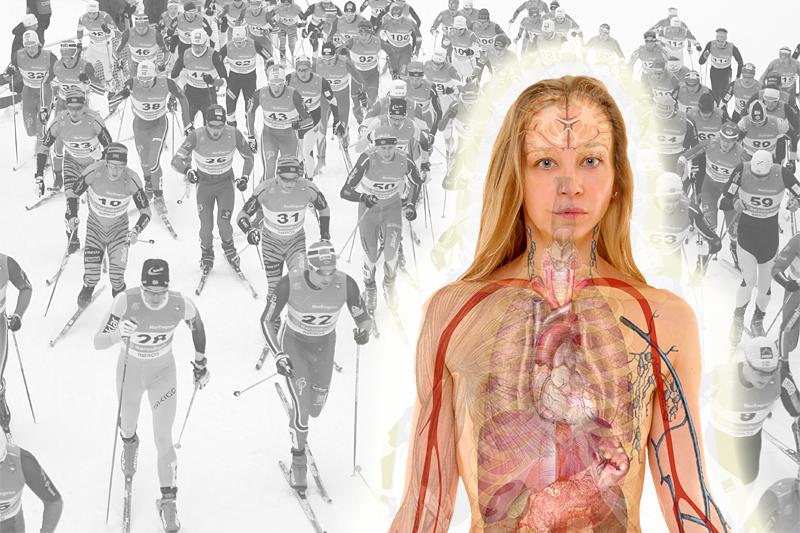 Indre organers ve og vel er avgjørende aspekter for optimale prestasjoner i idretten og i skisporet. Foto: Creative Commons/Pixabay.com og Langrenn.com. Fotomontasje: Langrenn.com.