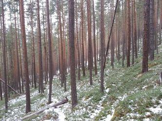 Tilskotsordningar i skogbruket_2017