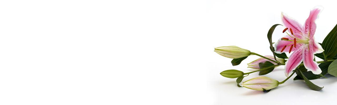 liljerosa[1]