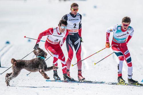 Under verdenscupfinalens jaktstart, som avsluttet minitouren i Québec 2017, fikk tettrioen Alex Harvey (til venstre), Niklas Dyrhaug og Johannes Høsflot Klæbo selskap av en hund som ville være med på morroa. Foto: Modica/NordicFocus.