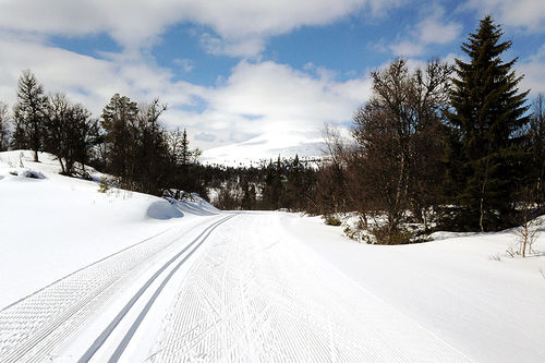 Mange steder er det fortsatt bra skiføre i midten av mai. Her fra Tylldalskjølen ved Tynset i Hedmark. Foto: Ingeborg Scheve.