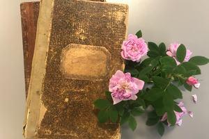 Roser og protokoller fra eldre tider