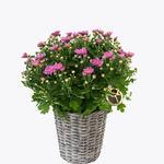 170334_blomster_planter