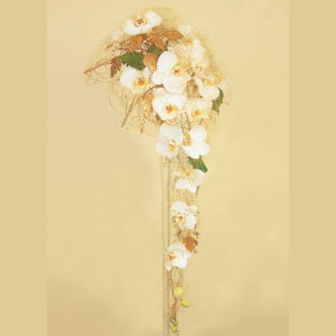 Phalaenopsisigull[1]