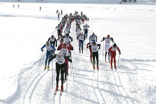 Trysil-Knut rennet. Foto: Desiree Kristiansen.