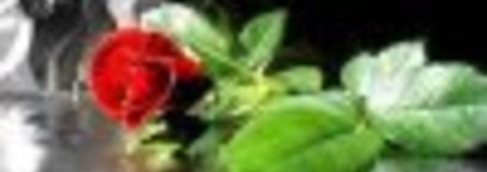 Blomst minne