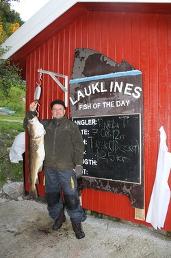 Terekin Cod 12,5 kg
