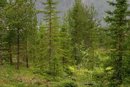 tett skoglandskaåp