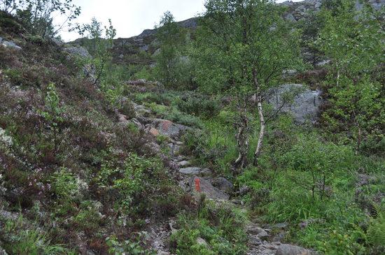 Leirfjord (49)