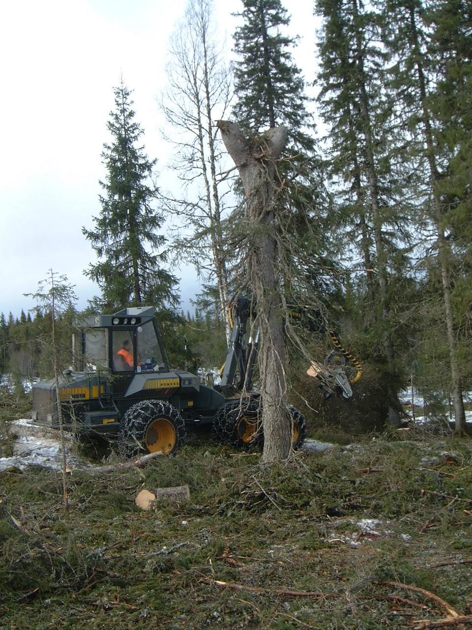 Skogsdrift Mokkamarka.jpg