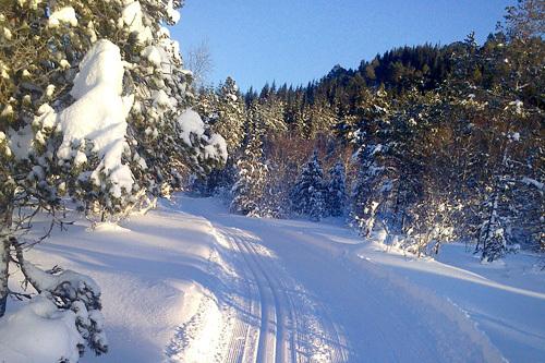 Bilde fra Osmarka tatt i desember 2013. Foto: Alf Ottar Dahlen.