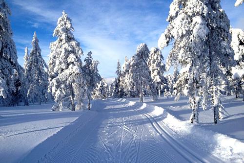 Ringkollen i Nordmarka, mellom Hønefoss og Oslo. Foto: Kirsti Kringhaug/Langrenn.com.