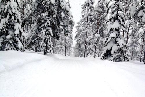 Fra løypa til Trysil Skimaraton dagen før 2014-utgaven. Foto: Bjørn Håkenrud/Swix Sport.