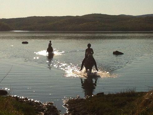 folkehelseforum - hester i vann