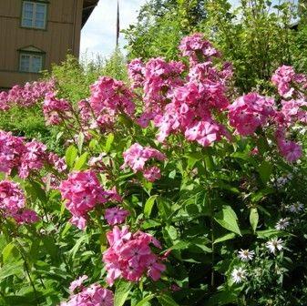 Sommer blomster
