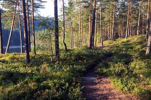 Illustrasjonsbilde for Montebelloløpet. Foto: Montebellotrippelen.