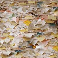 papirrot[1][1]