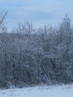 Vinterbilde_145x193