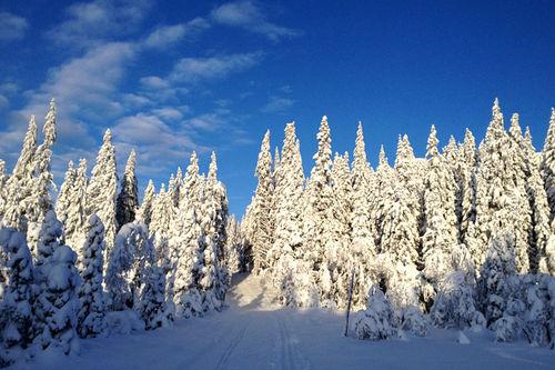Illustrasjonsbilde. Foto: Kirsti Kringhaug/Langrenn.com.