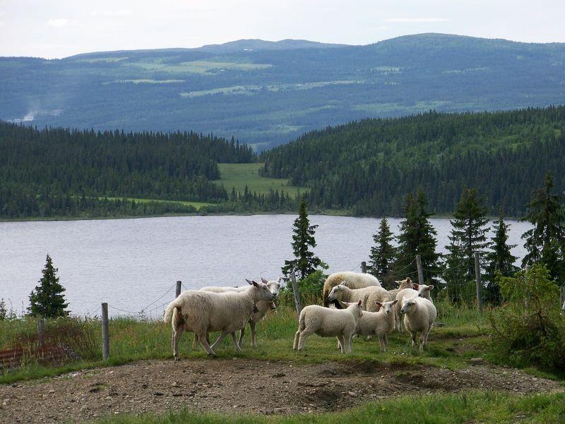 Sauer på tur ved Rausjøen, Gausdal