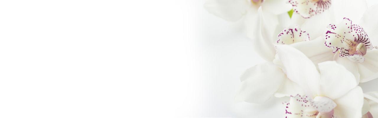 hviteblomster