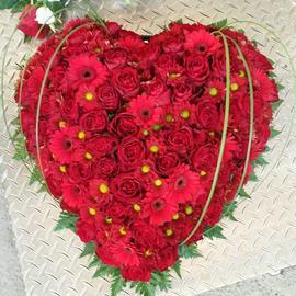 Hjerte rødt roser og gerbra
