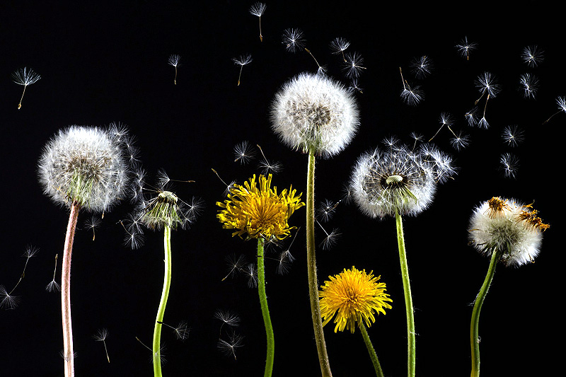Følg med på pollenvarsler og røm fra kilden til problemene når det lar seg gjøre, er blant lege Tor Halvor Bjørnstad-Tuvengs anbefalinger. Foto: Creative Commons/Pixabay.com. Foto: Creative Commons/Pixabay.com.