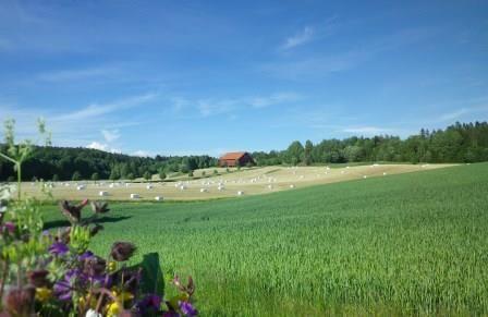Sommer i Eidsberg, foto-Serena Cocco