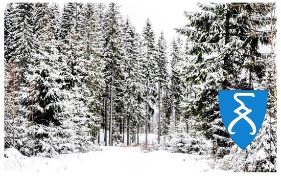Vinterskogsbilde