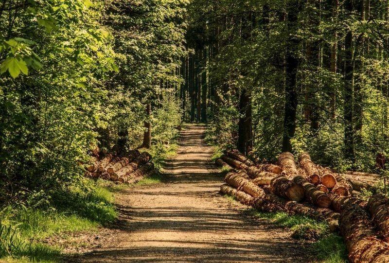 Illustrasjon skogbrann