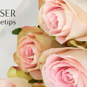 Roser-finn-stelletips-1-518x346