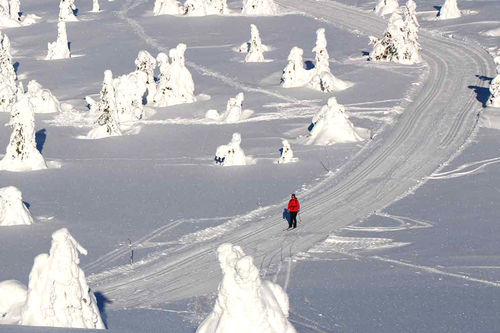 Nypreparerte spor, her fra Lunkefjell. Fra boka 35 turer i verdens beste skiterreng.