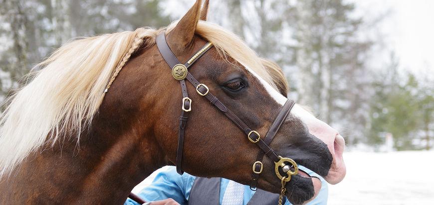 Hvorfor stille ut hesten