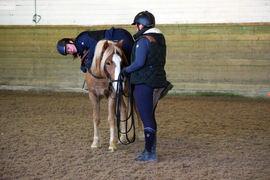 Nordlandshest/lyngshesten Vild Airion var en av hestene på unghestprogrammet i 2018.