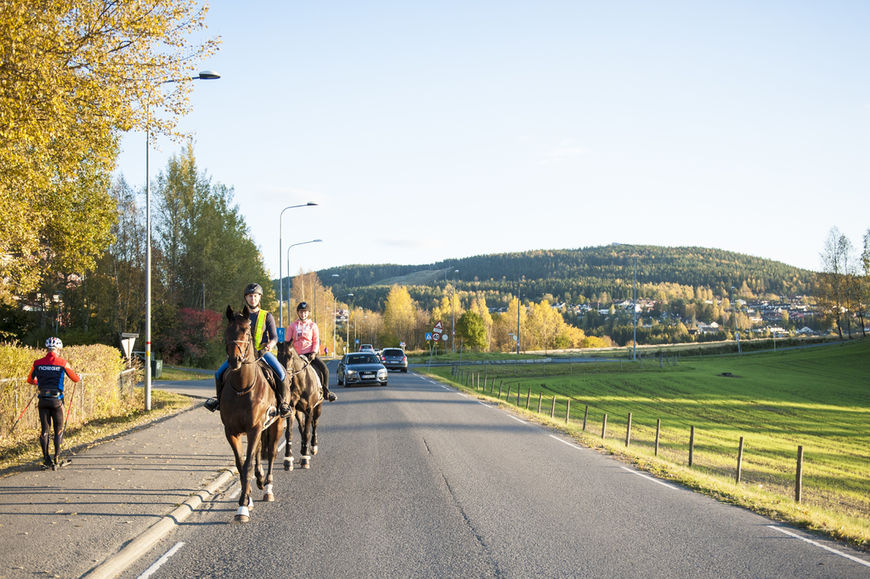 Hest i trafikk