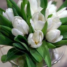 Tulipaner-hvite-760x760