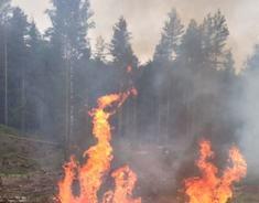 skogbrann - illustrasjonsbilde - NRBR