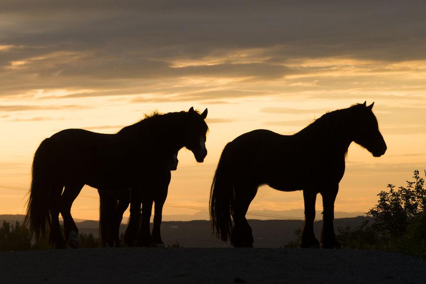Norsk Hestesenter er helt avhengig av midler fra Norsk Rikstoto for å kunne være et solid kompetansesenter for hest og for å utdanne hestepersonell.
