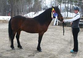 Slettmo Thord ble kåret og stilt som I i kvalitet, og med det spiss i treårsklassen. Foto: Elin V. Andersen