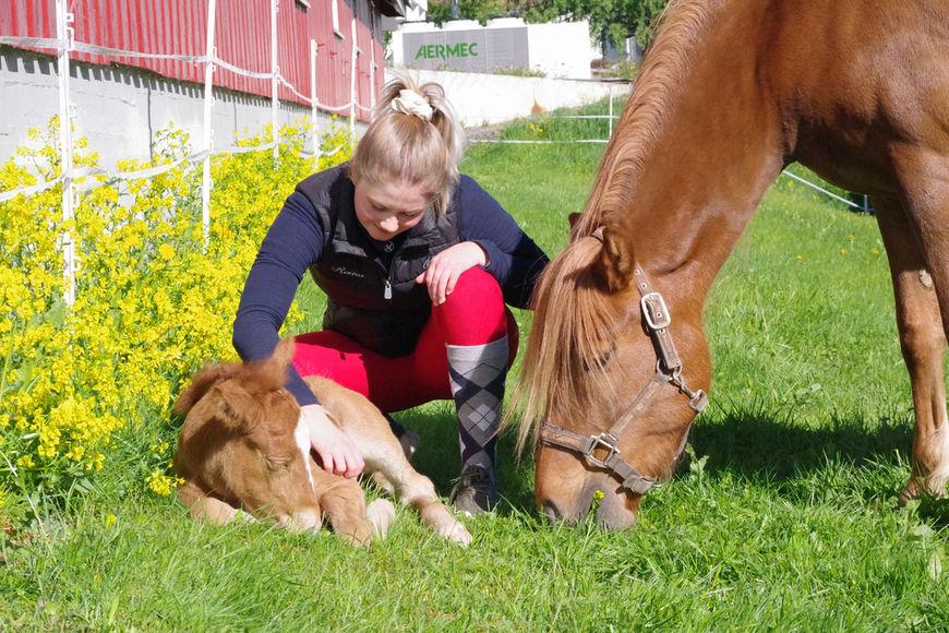 Reina Solberg Tysse, lærling i hestefaget, hilser på vår nye hest. Mamma Starums Lava følger med, men syns det er helt greit at vi beundrer avkommet.
